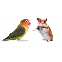 Зоотовары для птиц и грызунов